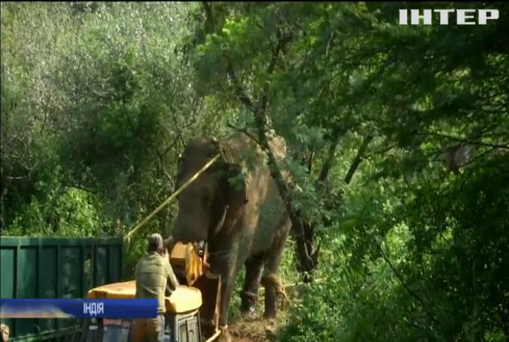 В Індії впіймали слона-вбивцю