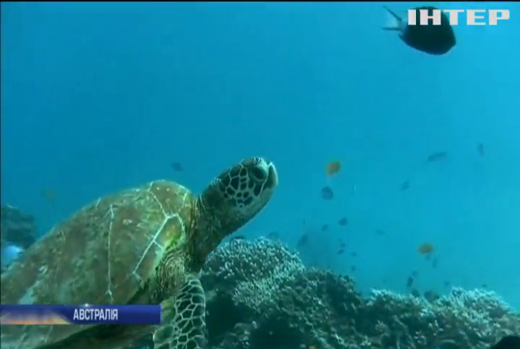 В Австралії роботи відновлюють коралові рифи