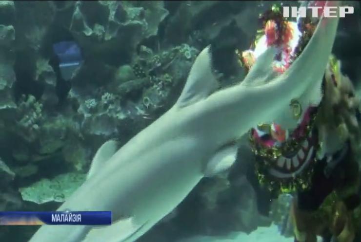 У Малазійському акваріумі влаштували традиційні китайські танці під водою