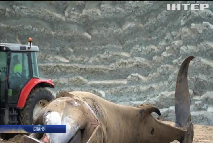 На іспанський пляж викинувся голодний кит