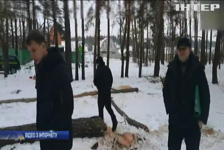 Під Києвом браконьєри вирубили кілька гектарів дерев