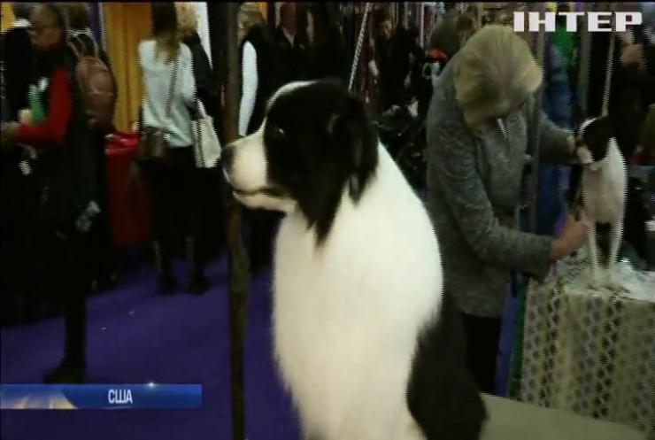 У США стартувала знаменита виставка собак