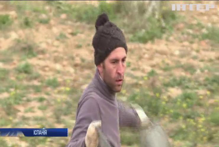 В Іспанії рятують оливкові дерева у незвичний спосіб