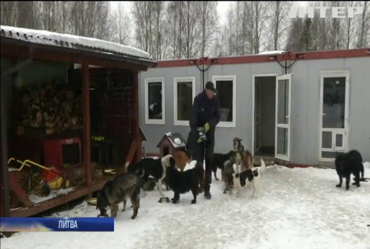 """""""День Валентина"""": у Литві започаткували сервіс знайомств для тварин"""