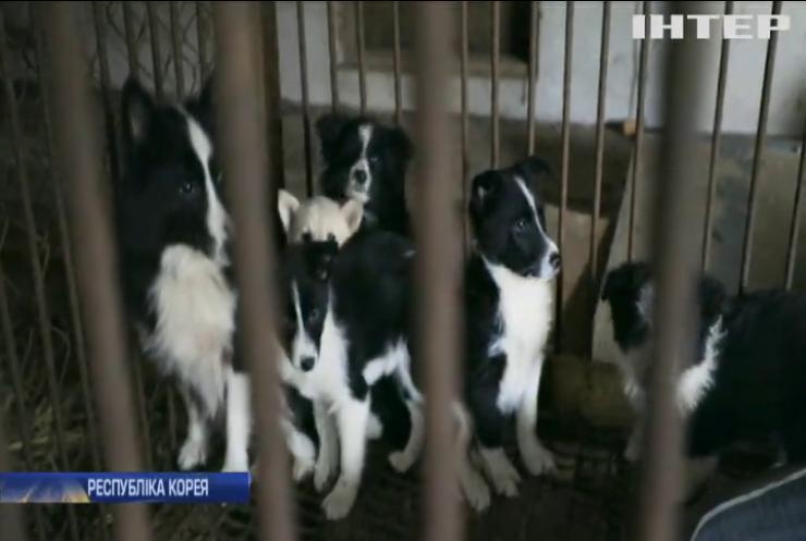 Кінець традиціям: у Південній Кореї закривають собачі ферми