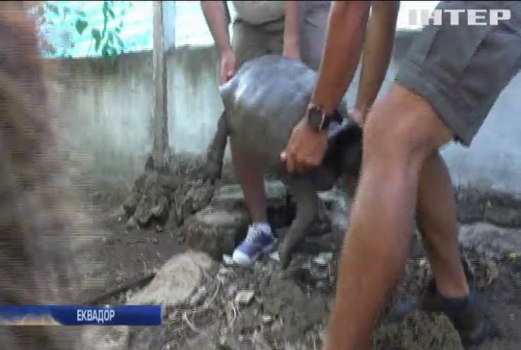 На Галапагосах знайшли гігантську черепаху (відео)
