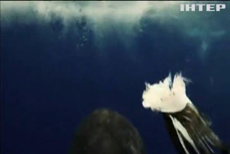 Професор плавала біля Антарктиди та зустріла косатку (відео)