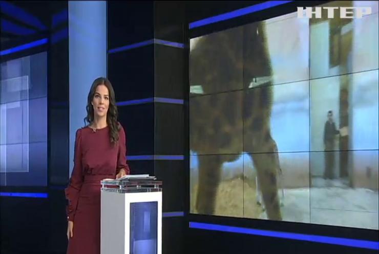 У зоопарку Праги показали новонароджене жирафеня