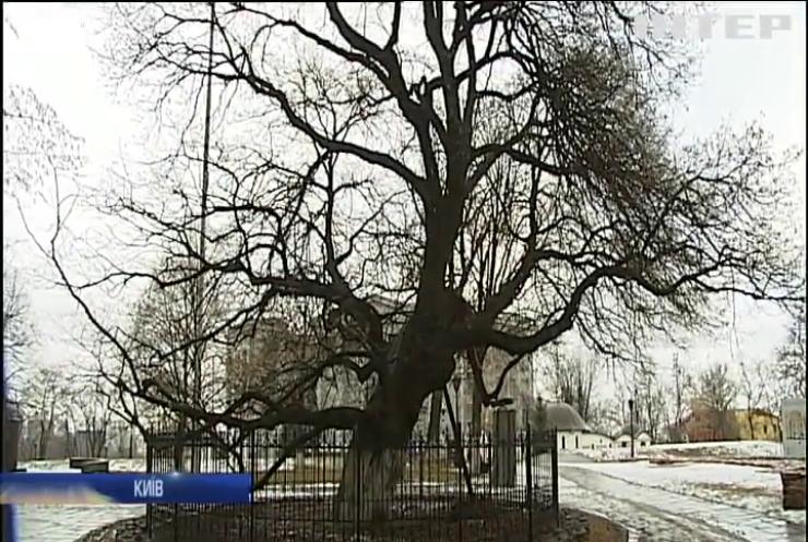 У Києві створили карту найстаріших дерев столиці