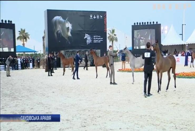 У Саудівській Аравії провели конкурс краси серед коней