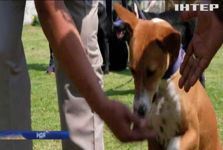 Безпритульний пес очолив елітний підрозділ поліції