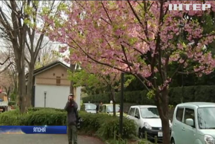 У Японії раніше часу розквітли сакури