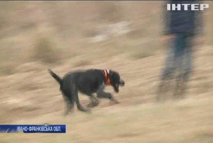 На Прикарпатті влаштували змагання мисливських собак