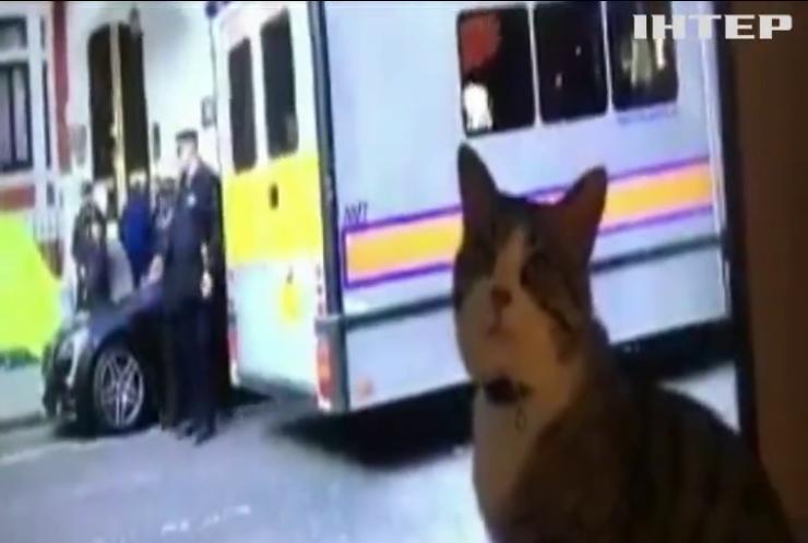 Кіт Джуліана Ассанджа спостерігав по телевізору за арештом свого господаря (відео)