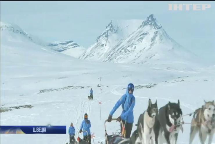 У Швеції змагалися у перегонах на собачих упряжках