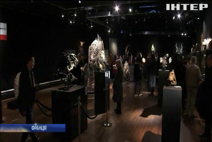 У Парижі відкрили виставку скам'янілостей і викопних артефактів