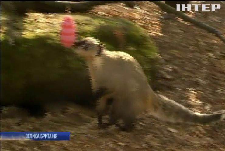 У Лондонському зоопарку святкують великдень