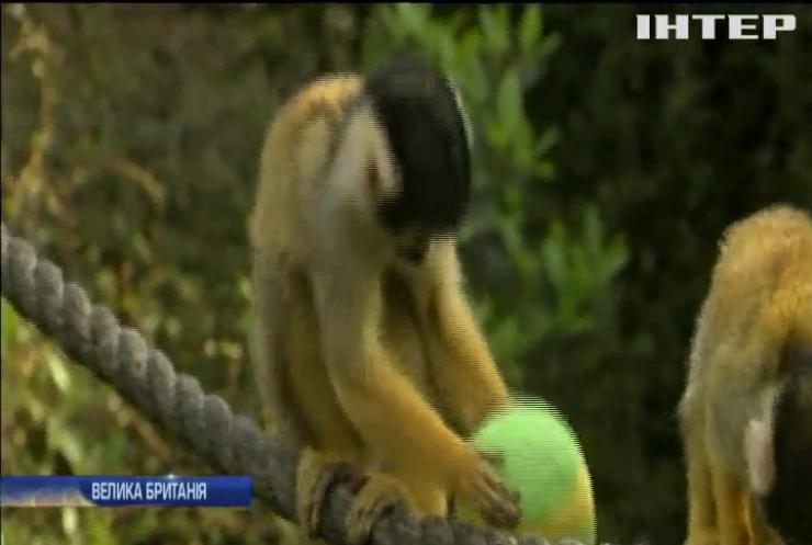 У Лондонському зоопарку тварини святкують Великдень