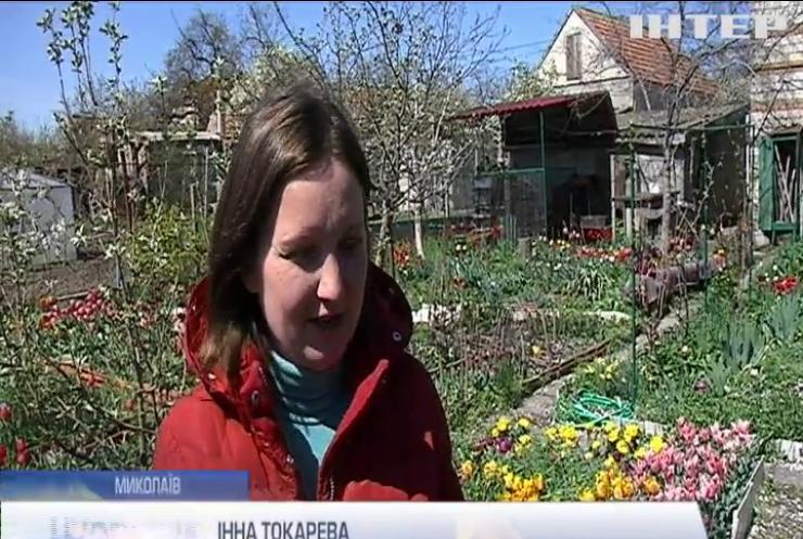 Мешканка Миколаєва виростила тисячі тюльпанів на подвір'ї