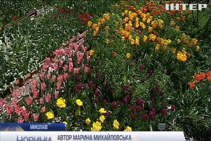 """""""Тюльпанова веселка"""" дивує жителів Миколаєва"""
