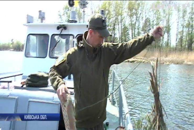У Києві активісти планують повернути рибу у водойми