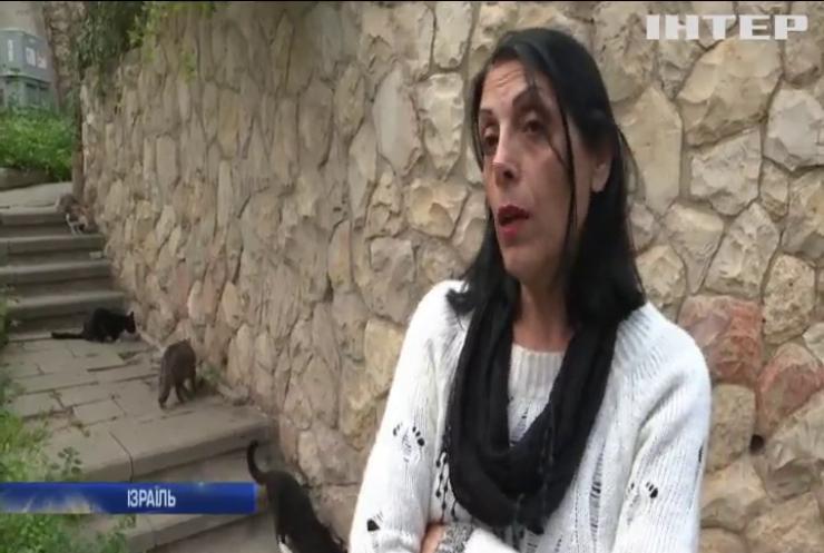 Ізраїль переповнюють безпритульні кішки
