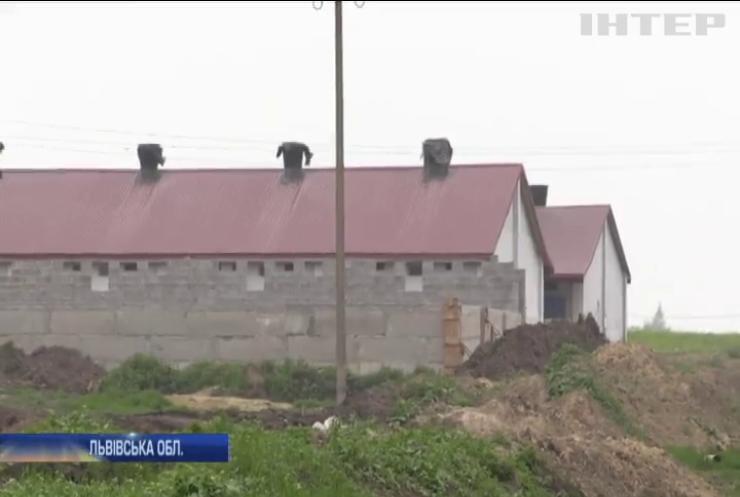 На Львівщині десятки туш свиней псуються просто неба