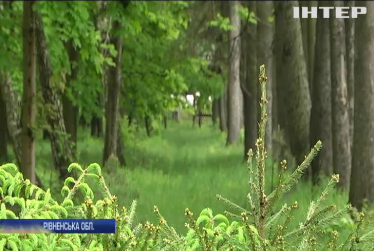 Війна за ліс: на Рівненщині лісники потерпають від терору