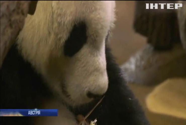 До віденського зоопарку привезли панду