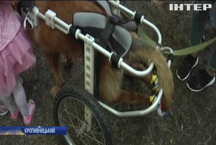 У Кропивницькому влаштували змагання безпородним собакам