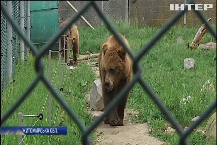 На Житомирщині рятують ведмедів після роботи у цирку