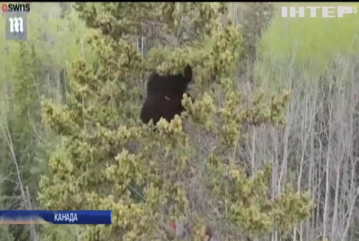 Жителі Канади врятували трьох ведмежат