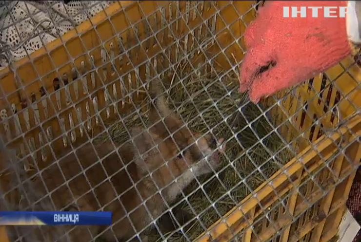 У Вінниці зоозахисник облаштував вдома притулок для тварин