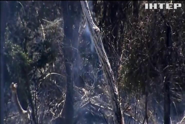 Південну Каліфорнію охопила пожежа