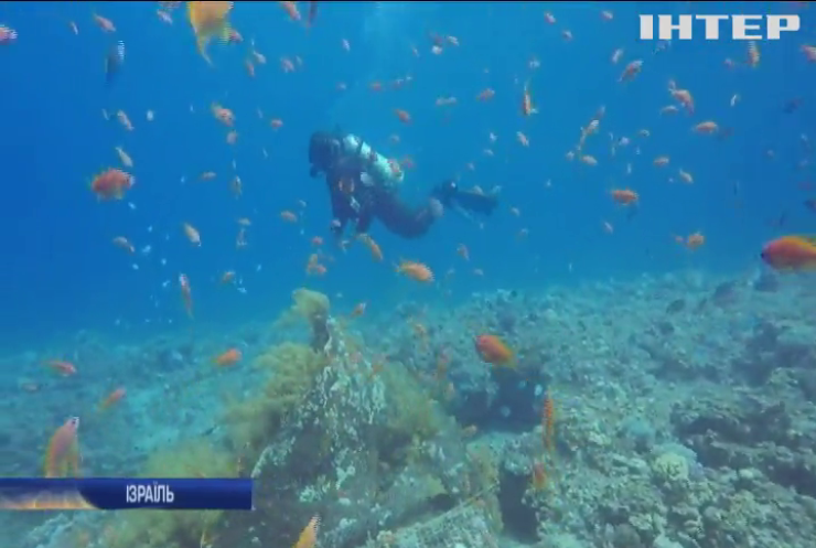 Ізраїльські екологи пересаджують кораловий риф