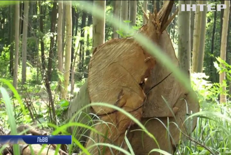 Чому у Львові масово вирубують ліс?