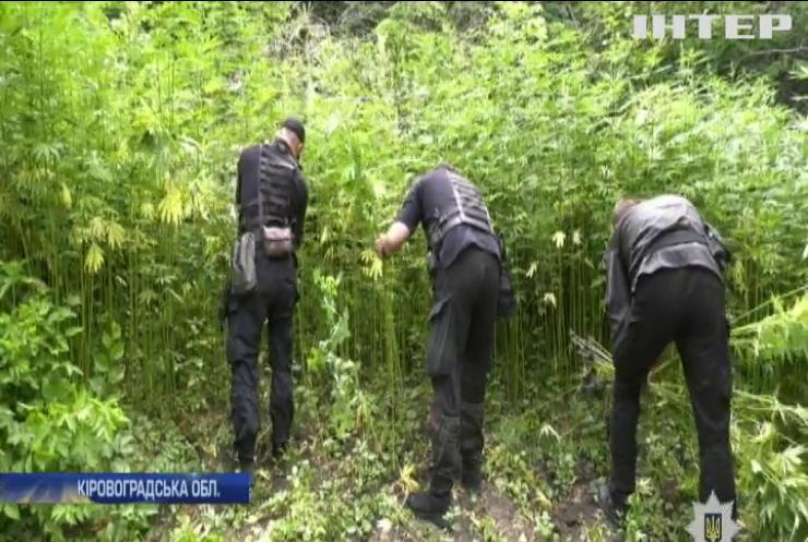На Кіровоградщині знайшли ліс конопель