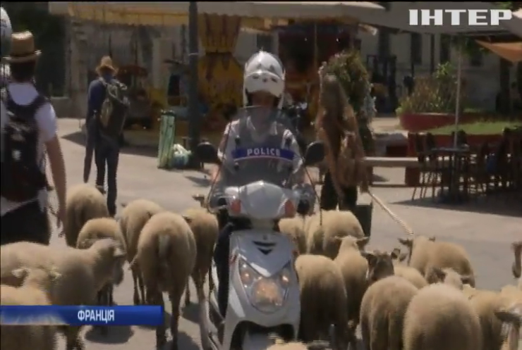 Жителям Парижу показали отари овець