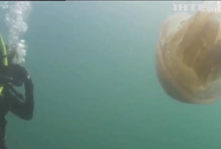 У Британії знайшли медузу завбільшки з людину