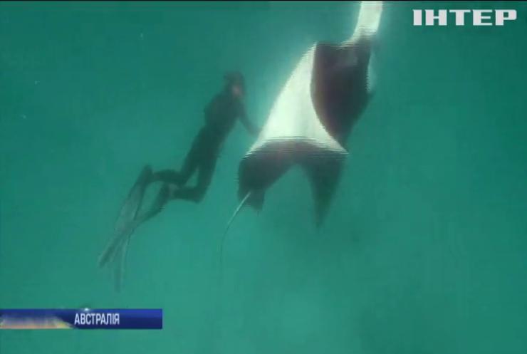 В Австралії гігантський скат попросив людей про допомогу