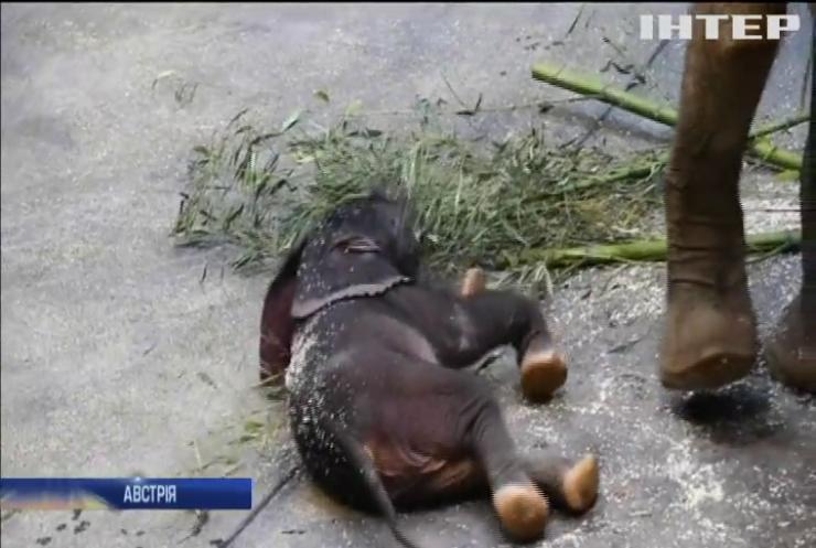 У віденському зоопарку народилося слоненя