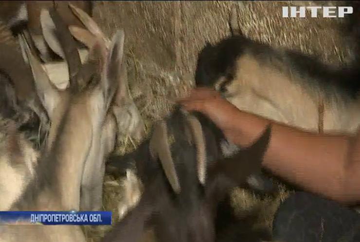На Дніпропетровщині волонтери врятували кіз від голодної смерті