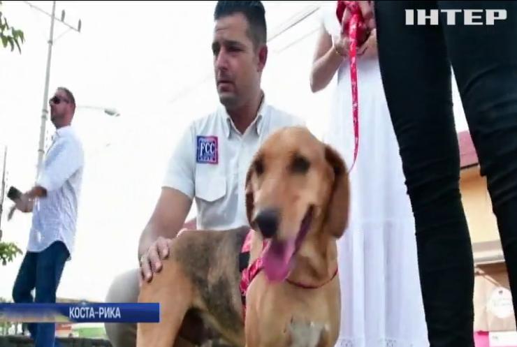 В Латинській Америці господаря собаки звинуватили у жорстокості