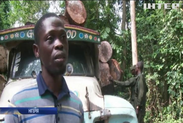Рейнджери рятують популяцію диких слонів у Нігерії