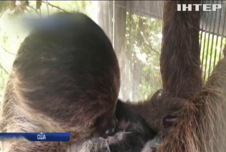 У зоопарку Маямі народилося дитинча лінивця