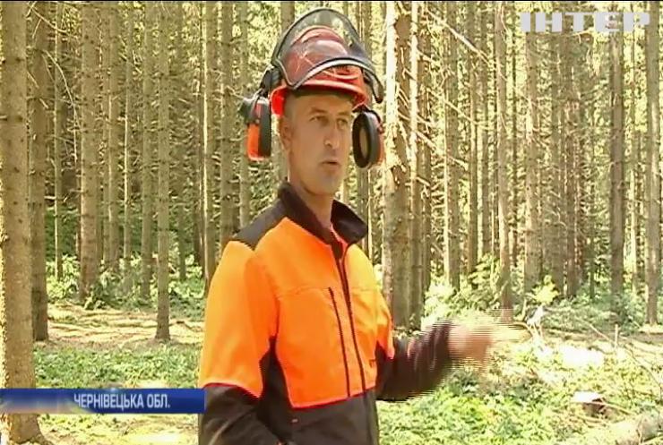 Звалити і розпиляти: на Буковині пройшли змагання лісорубів