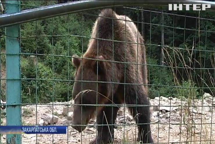 У Закарпатському заповіднику влаштували притулок для ведмедів