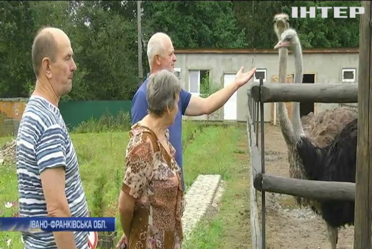 Ветеран АТО започаткував у Карпатах страусину ферму