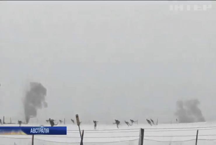 Небачений снігопад спантеличив кенгуру в Австралії (відео)