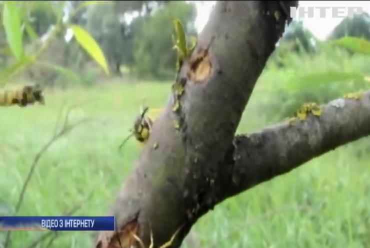 Жителі Прикарпаття потерпають від нашестя агресивних комах